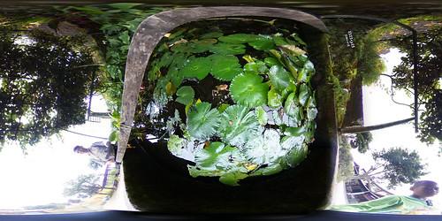 3德森有機農莊生態池(手機版請點照片右下角360)