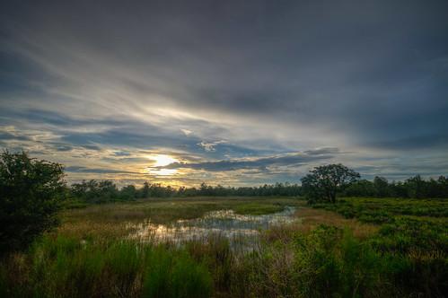 sunset florida swamp landscape green floridasunset swampsunset