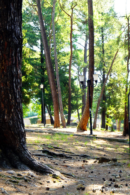 Деревья в Городском парке