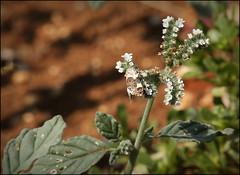 Mottled moth! - Photo of Reilhac