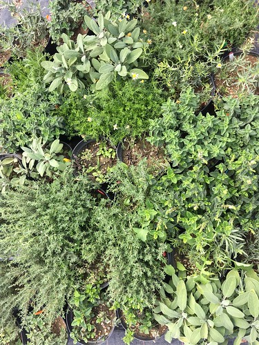 SCEPTREplus Herb weed control
