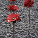 Poppies IWM north