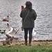 Swan-warning