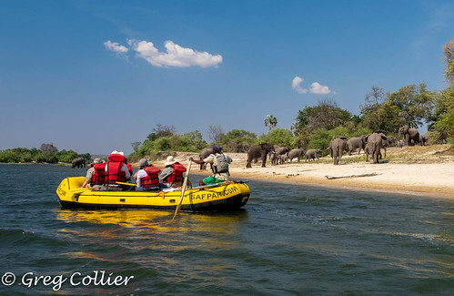 zambezi-11.jpg