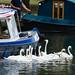 <p><a href=&quot;http://www.flickr.com/people/davea2007/&quot;>Dave_A_2007</a> posted a photo:</p>&#xA;&#xA;<p><a href=&quot;http://www.flickr.com/photos/davea2007/44054475132/&quot; title=&quot;Follow that boat (Avon swans)&quot;><img src=&quot;http://farm2.staticflickr.com/1857/44054475132_798ce821de_m.jpg&quot; width=&quot;240&quot; height=&quot;135&quot; alt=&quot;Follow that boat (Avon swans)&quot; /></a></p>&#xA;&#xA;