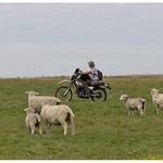 It's a dog on a bike chasing a sheep.