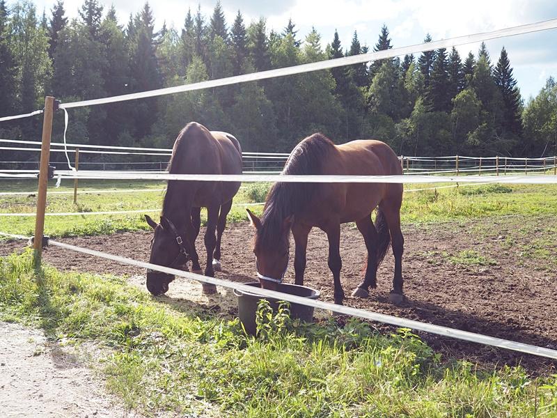 vehmasmäen eläinpuisto hevoset
