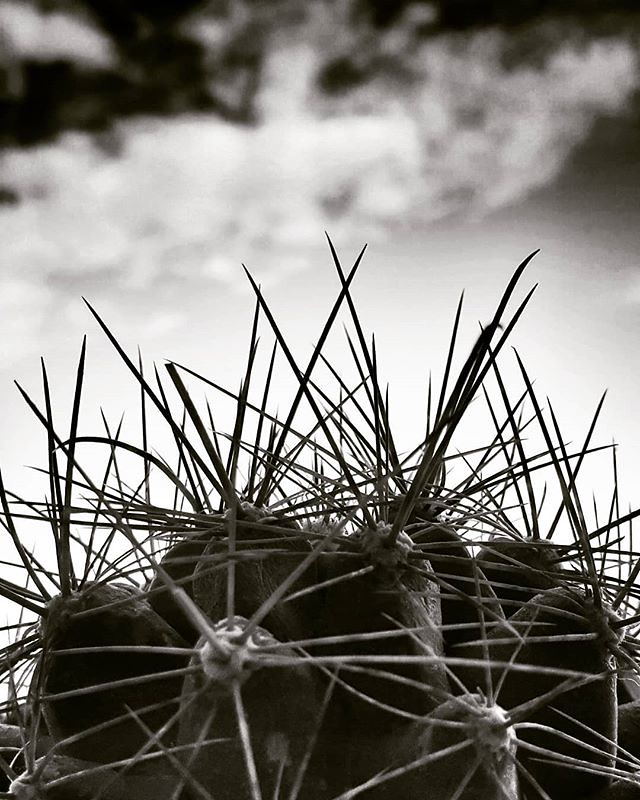 Roses may say 'I love you,' but the cactus says 'F*** off.' #cactus #spike #blackandwhite #bw #sky #clouds #life #black #igers #igersitalia #photooftheday #picoftheday #photography #moodoftheday #plants #love #dark