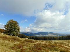 s-a ivit pe culme toamna/atop the hill appeared autumn