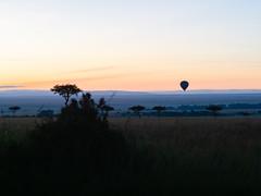 2018, Morning in masai Mara