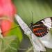 Butterfly (62)