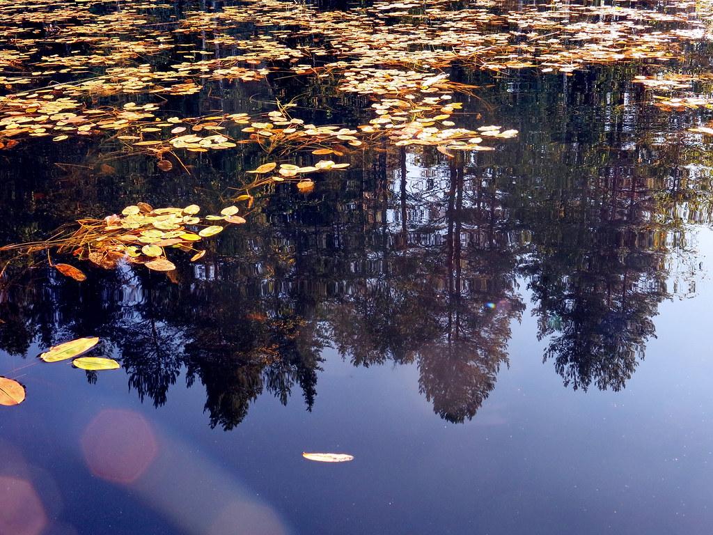 Отражения мира в фотографиях