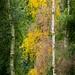 Autumnal Cascade