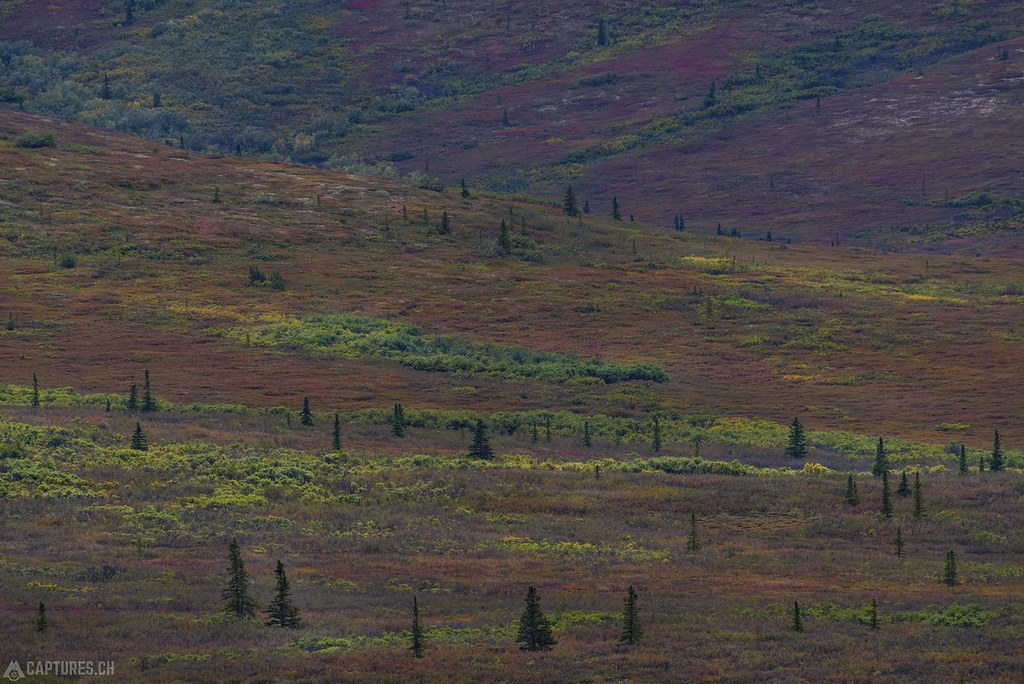 Fall colors - Alaska