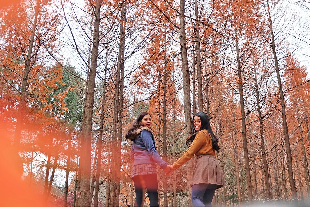 autumn_trees_holding_hands