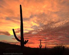 Dusk and Clouds, Pima County, AZ
