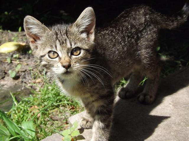 Kitten, Fujifilm FinePix S4500