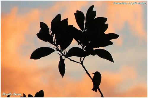 Passarinho e o pôr-do-sol_Monte Dourado-Pará-PA