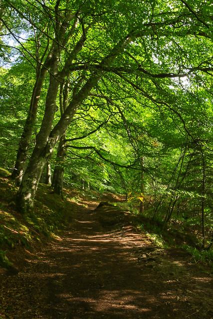 Woodland Walk, Canon EOS 7D MARK II, Canon EF 20-35mm f/3.5-4.5 USM