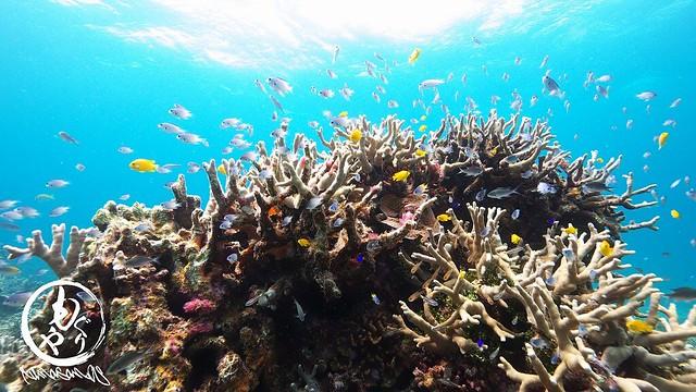 サンゴと熱帯魚たちに癒やされました♪