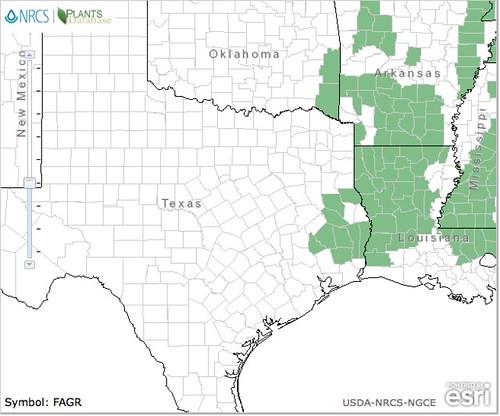 Beech USDA TX