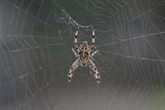 Clever Spider
