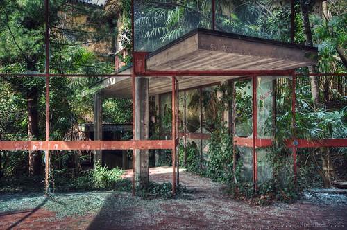 jungle inside