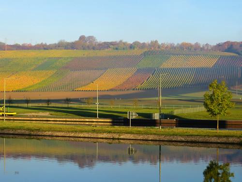 Vinyards near Bamberg (1 of 3)