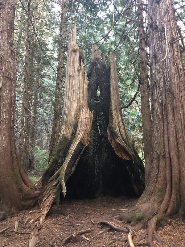 Burnt Cedar