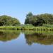 Calme et sérénité du lac de Grand-Lieu