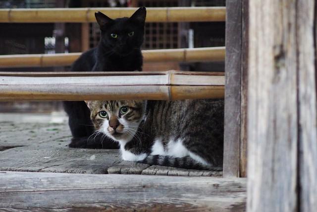 Today's Cat@2018-09-07
