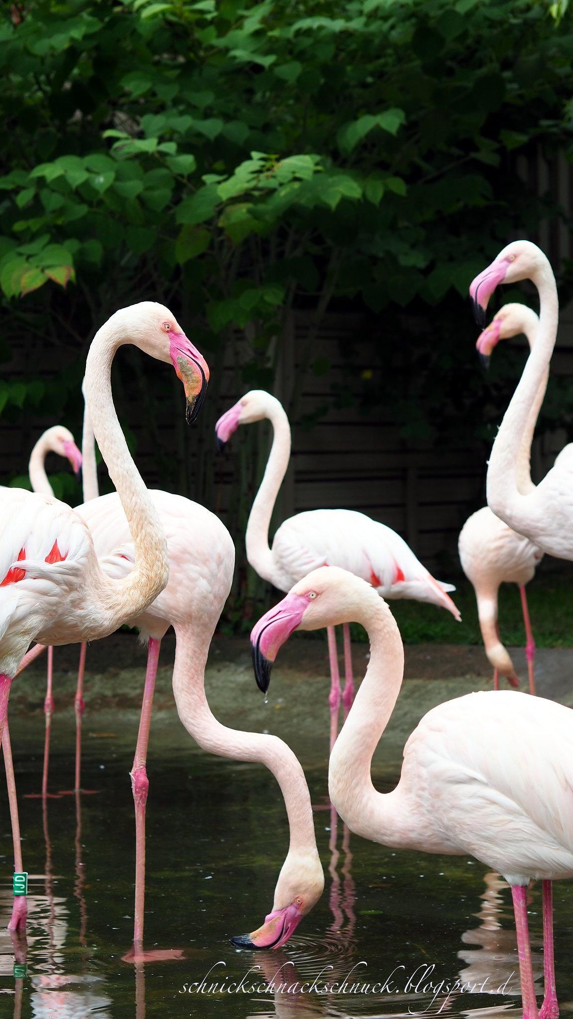 Flamingos auf Öland