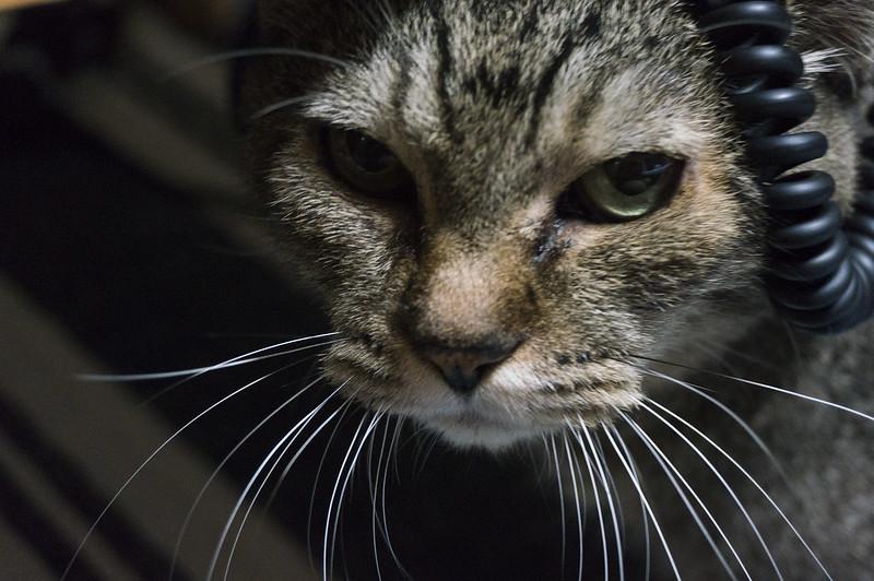 カメラに怯える猫