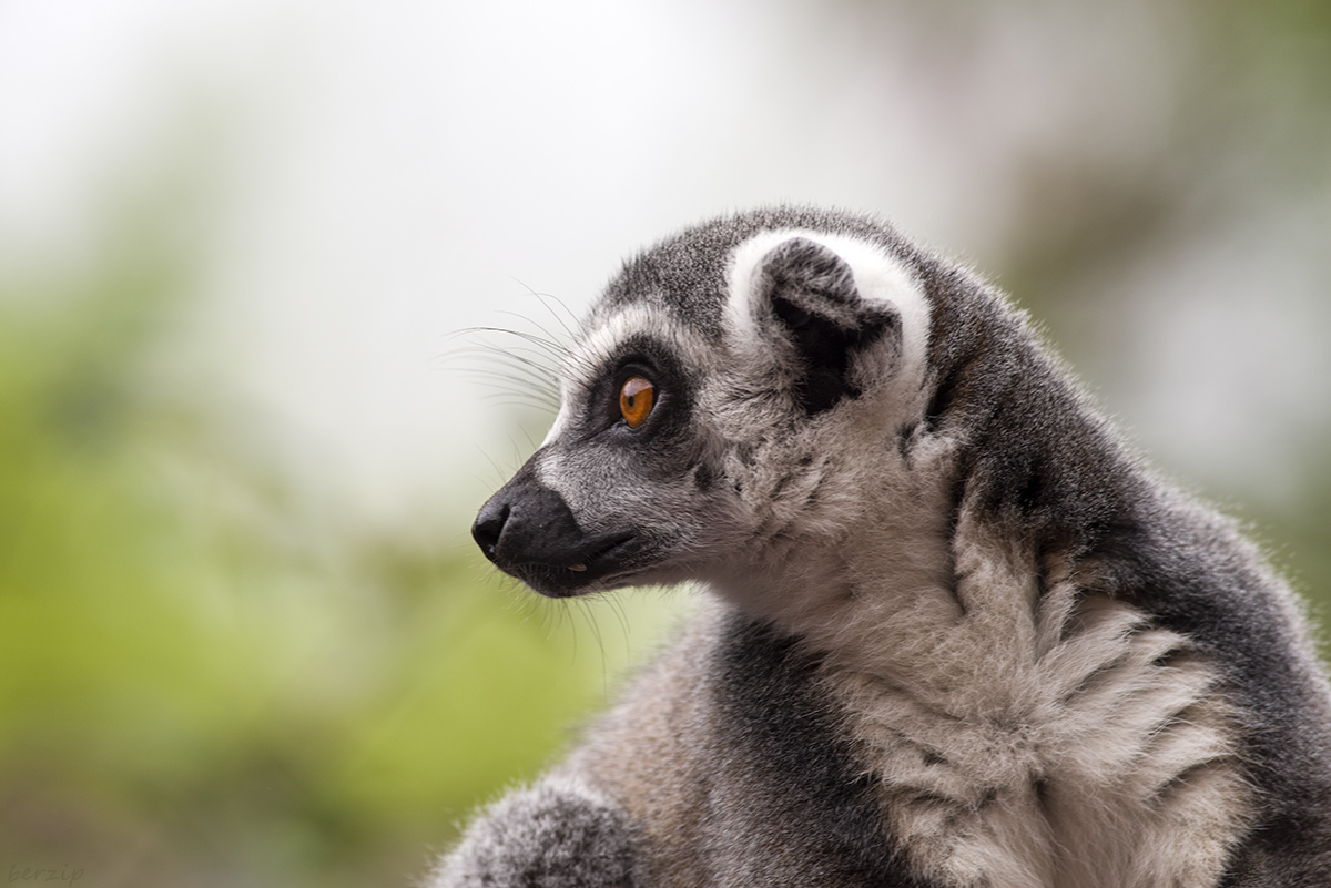Zoos / Parcs animaliers - Page 22 43932904574_2b08def0cb_o