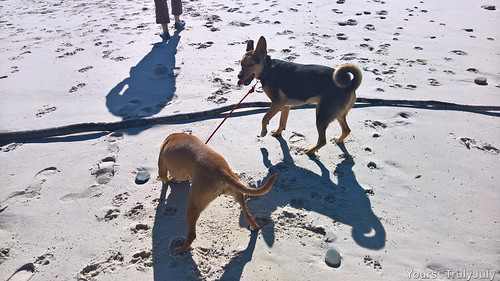 Starsky looks back in surprise as Gigi took hold of his leash and keeps him at bay.