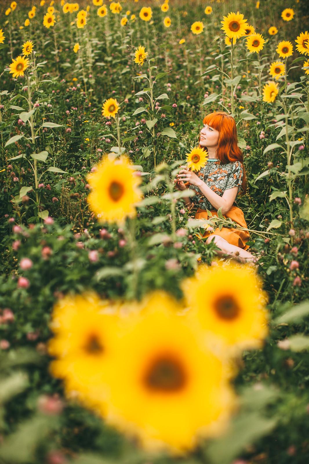 sunflower field-17