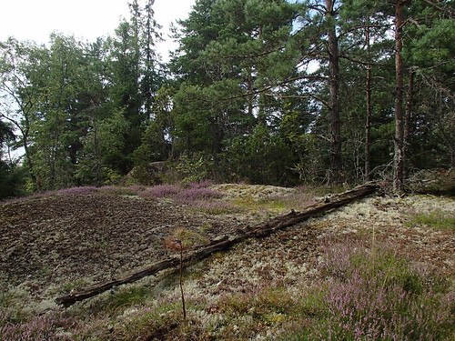 SÖ E60 Ljunghäll