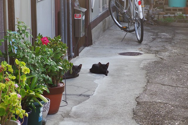 Today's Cat@2018-09-02