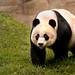 Walking Panda 3-0 F LR 9-16-18 J037