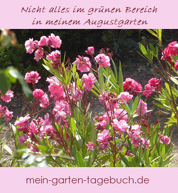 Augustgarten - zum Pinnen