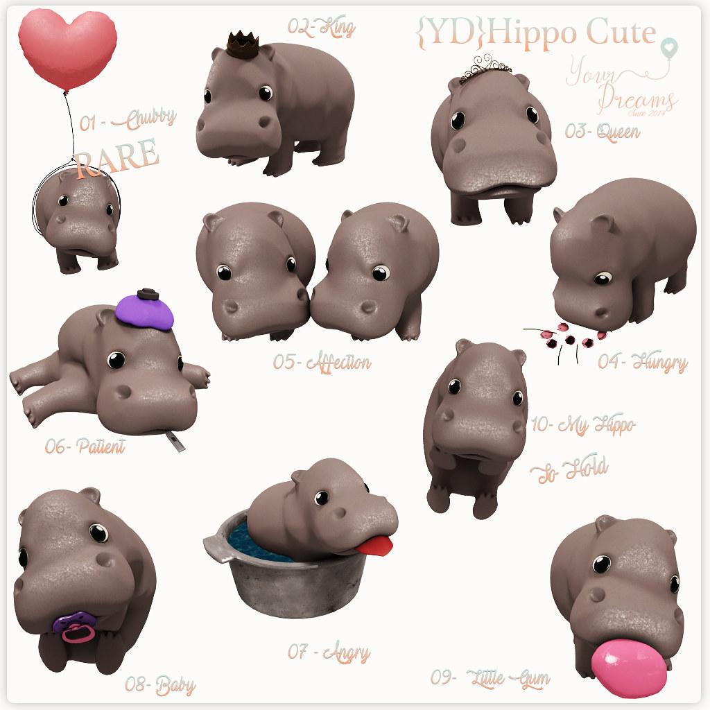 {YD}Hippo Cute - TeleportHub.com Live!