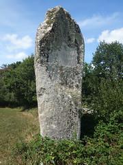 Le menhir dit « La Pierre Longue » près de Pluherlin - Morbihan - Août 2018 - 03