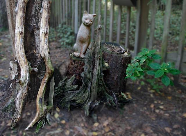 ##sad cat, Pentax K-5 II, smc PENTAX-DA L 18-55mm F3.5-5.6 AL WR