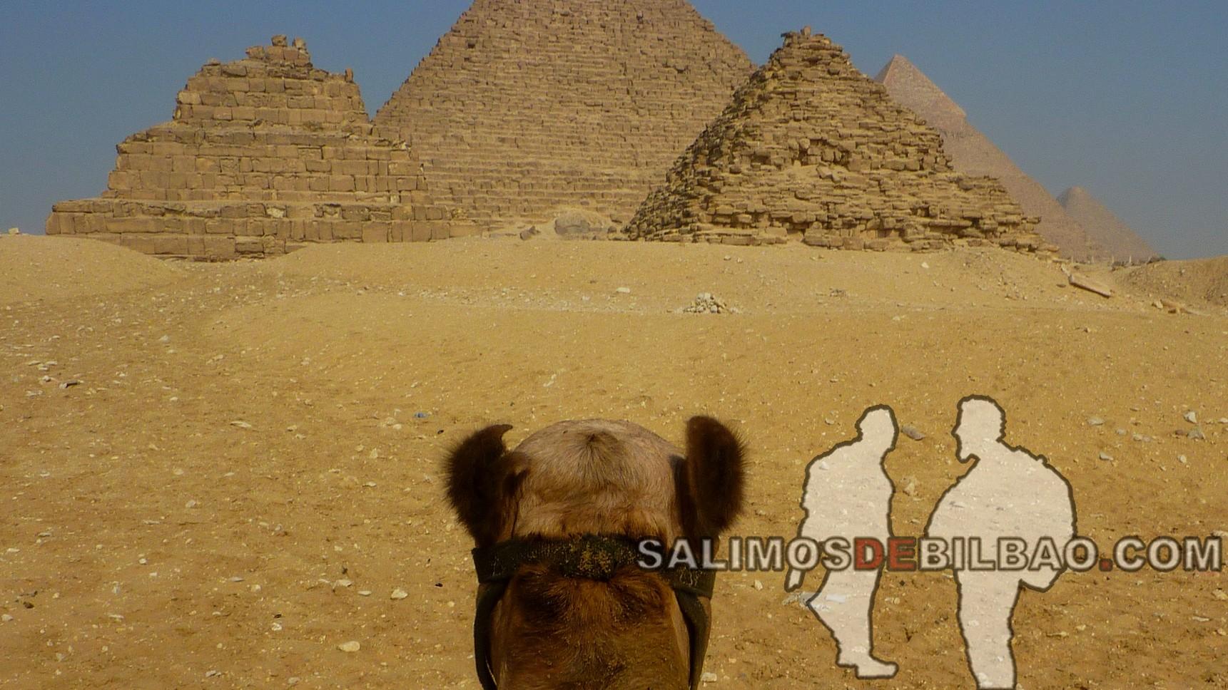 0098. Camello, Pirámides de Giza