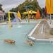 dog swim 20181061