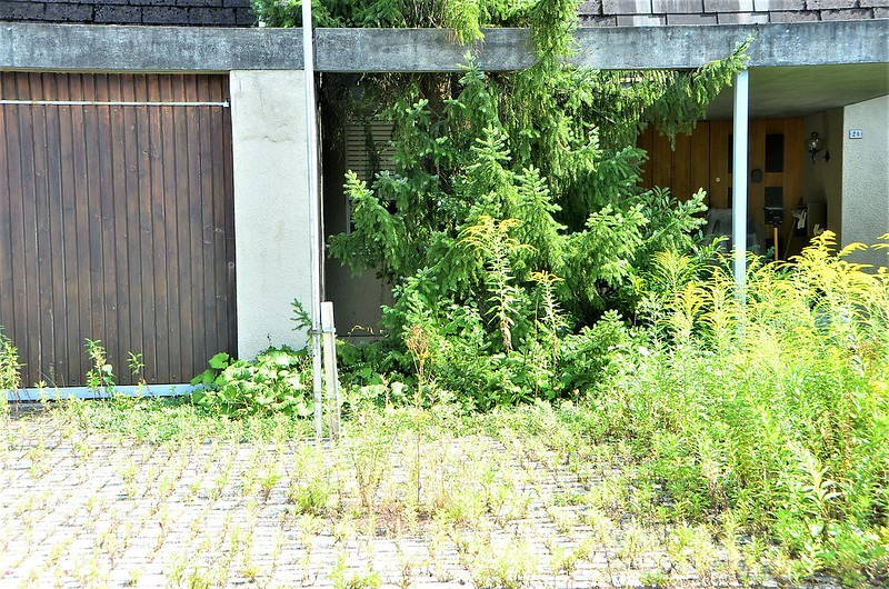 Empty House and Golden Rod 19.08 (1)