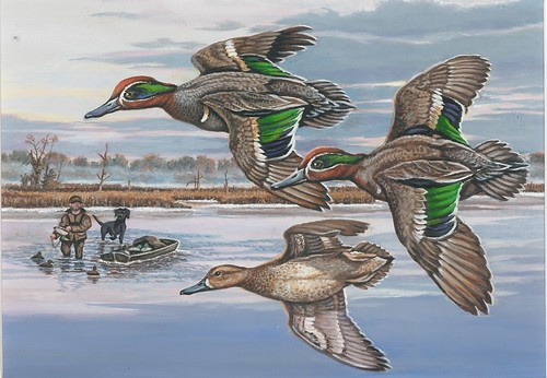 2018 Federal Duck Stamp Contest Entry 136