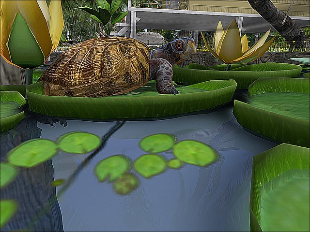 Tranquil Tiki Island - Feeling His Inner Turtle