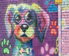 Dog vibrant graffiti