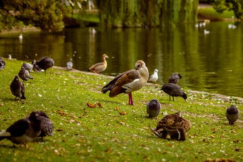 Fauna del Parc Léopold